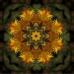 Mandala sowieso<br>Digitalkomposition